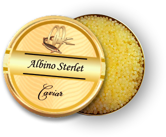 Caviar d'or d'Albino Sterlet
